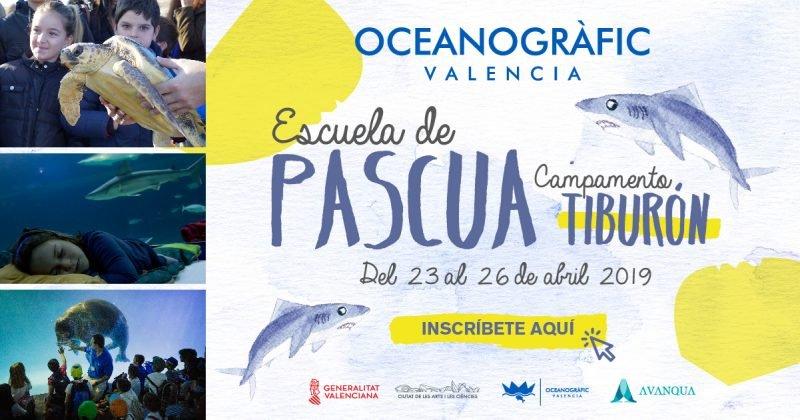 Escuela Pascua Oceanografic 2019 1200x630px