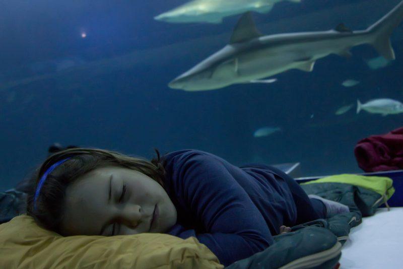 Oceanografic Dormir Tiburones