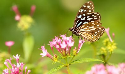 Mariposa Naturaleza