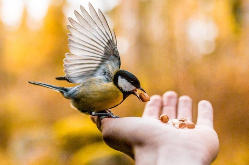 Aves Naturaleza