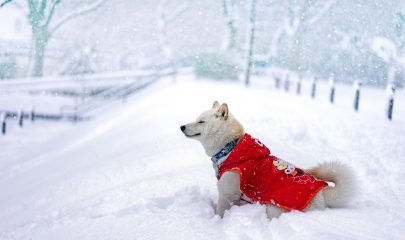 Nieve Perro
