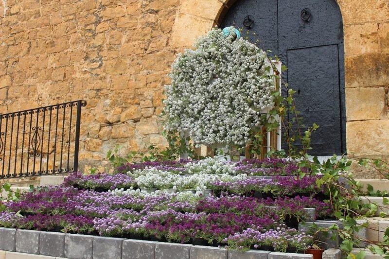 Aras En Flor 8
