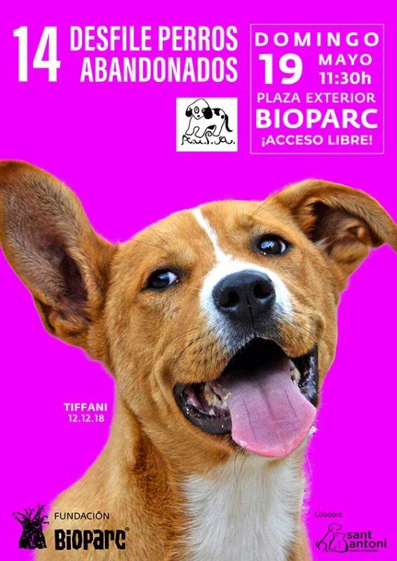 Desfile Perros Abandonados Bioparc 2019 Cartel