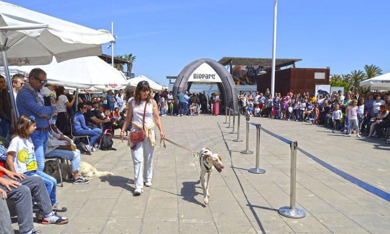Desfile Perros Abandonados Bioparc 4