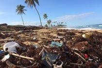Basura Naturaleza Playa