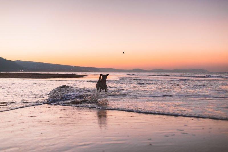 Playa Perros 1