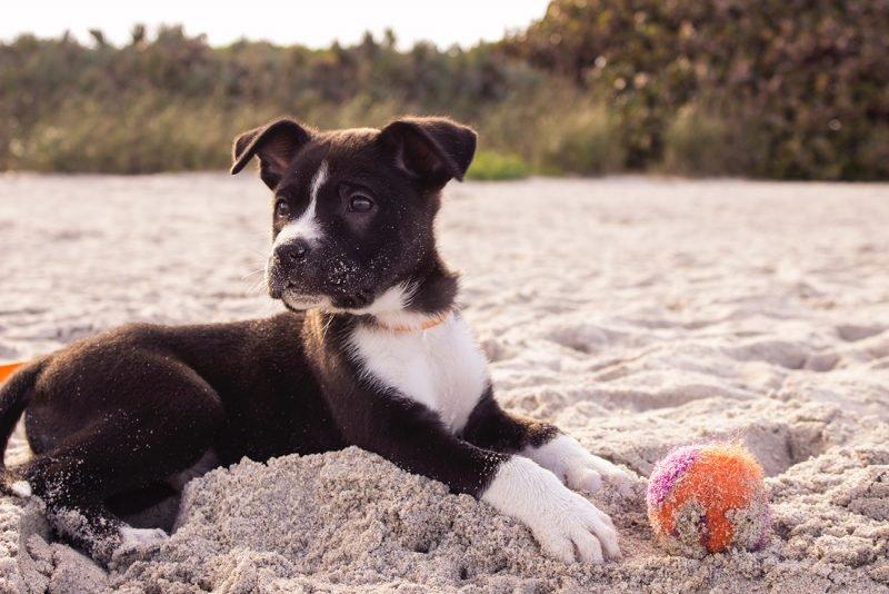Playa Perros 3