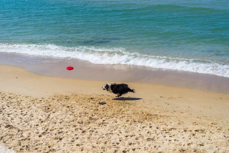 Playa Perros 4