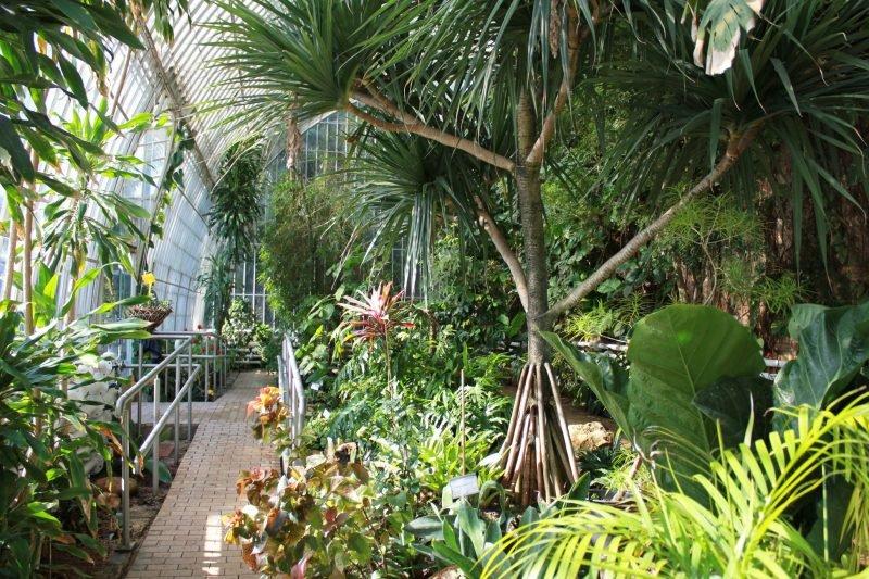 Visitas Guiadas Botanico 9