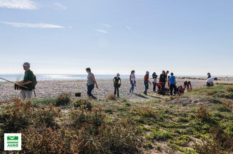 Colla Verda Plantacion Playa Sagunto 1