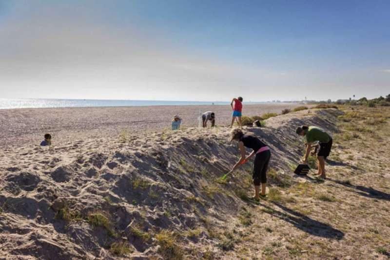 Colla Verda Plantacion Playa Sagunto 3