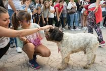 Feria Animalista Valencia 4