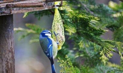 Taller Comedero Aves 1