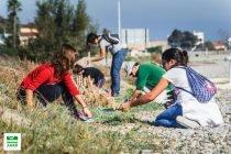 Colla Verda Plantacion Playa Sagunto 2