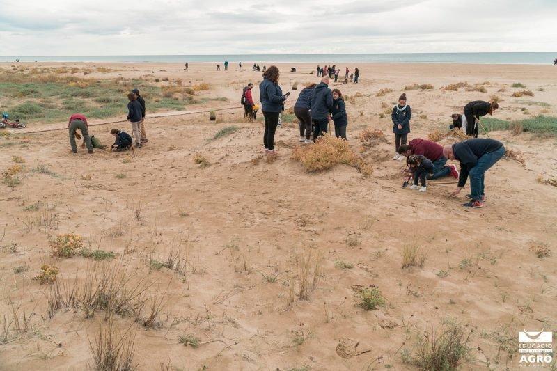 Colla Verda Plantacion Playa Sagunto 6