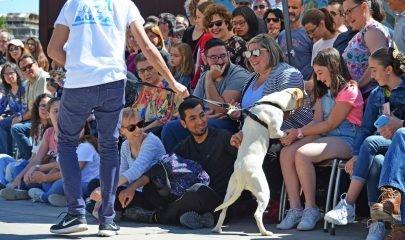 Desfile Adoptar Perros Bioparc 2