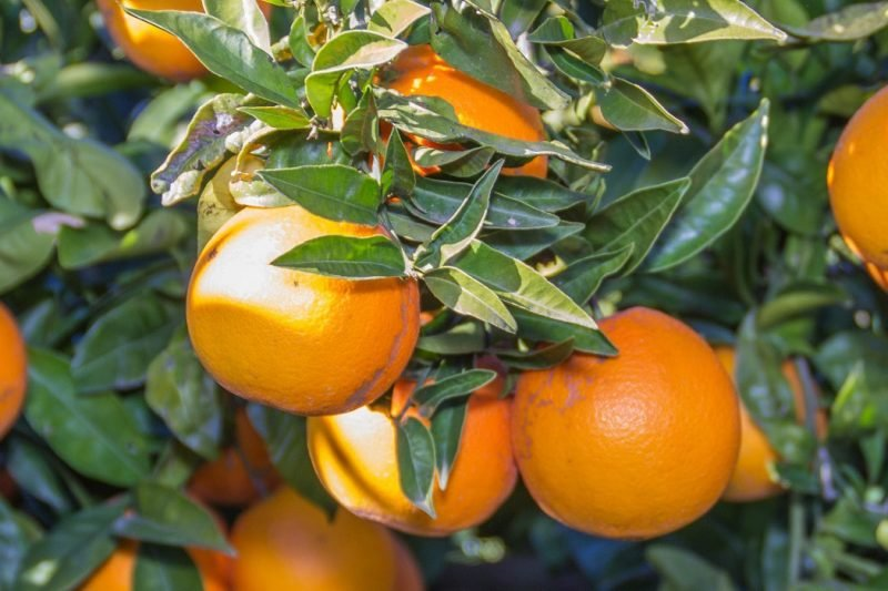 Casa Penya Taller Naranjas