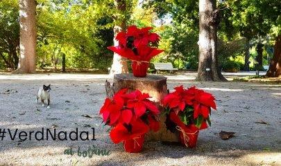 Visitas Guiadas Gratuitas Botanico Navidad