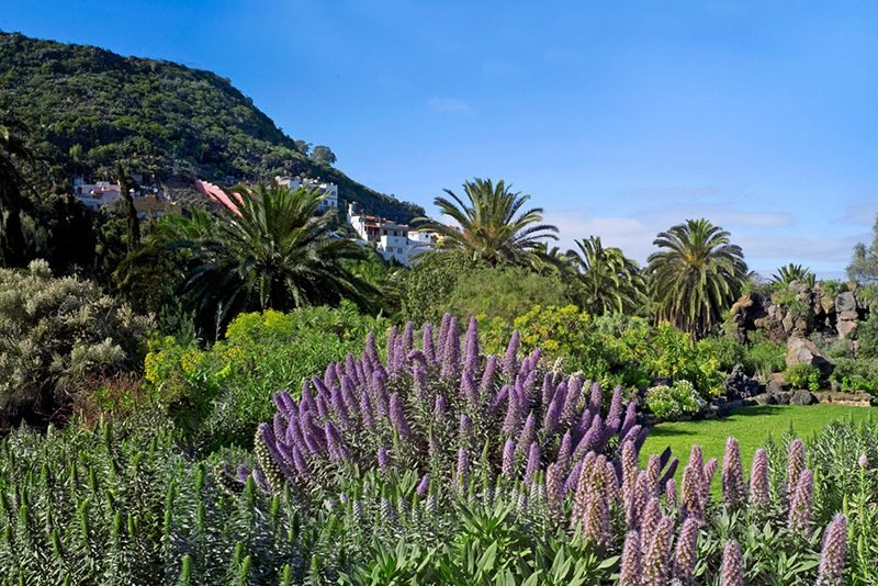 Jardin Botanico Viera Clavijo